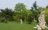 环-草坪1